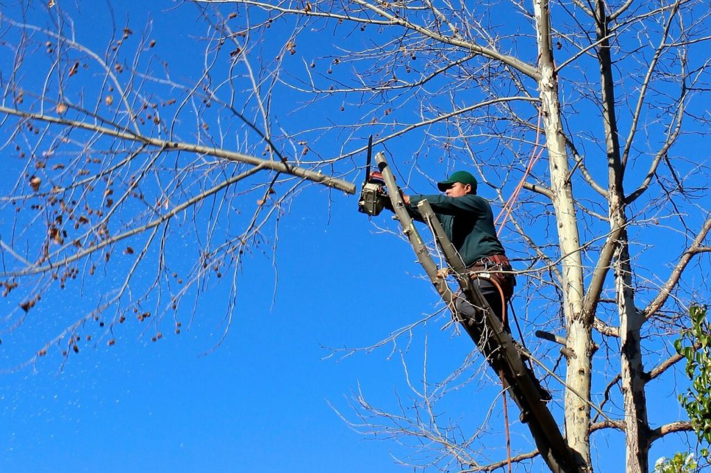 Contact Us-Mesa Tree Trimming and Stump Grinding Services-We Offer Tree Trimming Services, Tree Removal, Tree Pruning, Tree Cutting, Residential and Commercial Tree Trimming Services, Storm Damage, Emergency Tree Removal, Land Clearing, Tree Companies, Tree Care Service, Stump Grinding, and we're the Best Tree Trimming Company Near You Guaranteed!