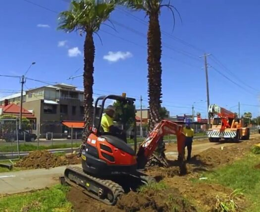 Palm Tree Trimming and Removal-Mesa Tree Trimming and Stump Grinding Services-We Offer Tree Trimming Services, Tree Removal, Tree Pruning, Tree Cutting, Residential and Commercial Tree Trimming Services, Storm Damage, Emergency Tree Removal, Land Clearing, Tree Companies, Tree Care Service, Stump Grinding, and we're the Best Tree Trimming Company Near You Guaranteed!