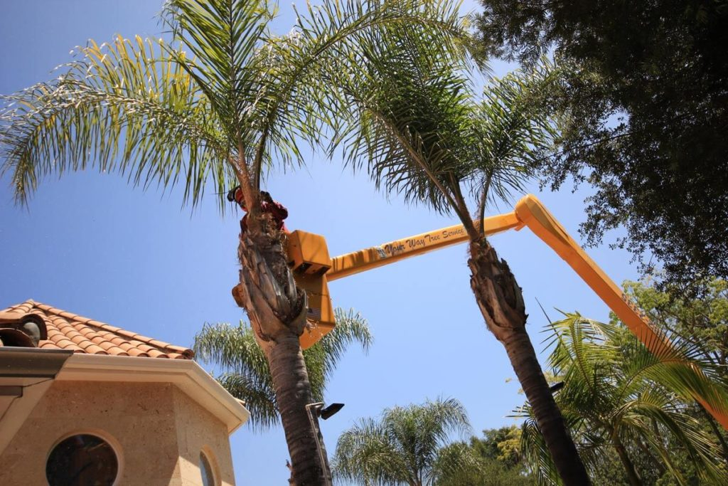 Palm Tree Trimming-Mesa Tree Trimming and Stump Grinding Services-We Offer Tree Trimming Services, Tree Removal, Tree Pruning, Tree Cutting, Residential and Commercial Tree Trimming Services, Storm Damage, Emergency Tree Removal, Land Clearing, Tree Companies, Tree Care Service, Stump Grinding, and we're the Best Tree Trimming Company Near You Guaranteed!