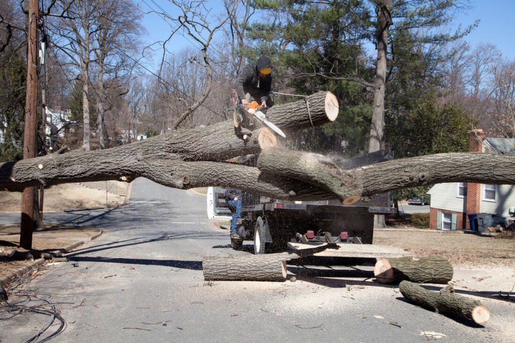 Residential Tree Services-Mesa Tree Trimming and Stump Grinding Services-We Offer Tree Trimming Services, Tree Removal, Tree Pruning, Tree Cutting, Residential and Commercial Tree Trimming Services, Storm Damage, Emergency Tree Removal, Land Clearing, Tree Companies, Tree Care Service, Stump Grinding, and we're the Best Tree Trimming Company Near You Guaranteed!