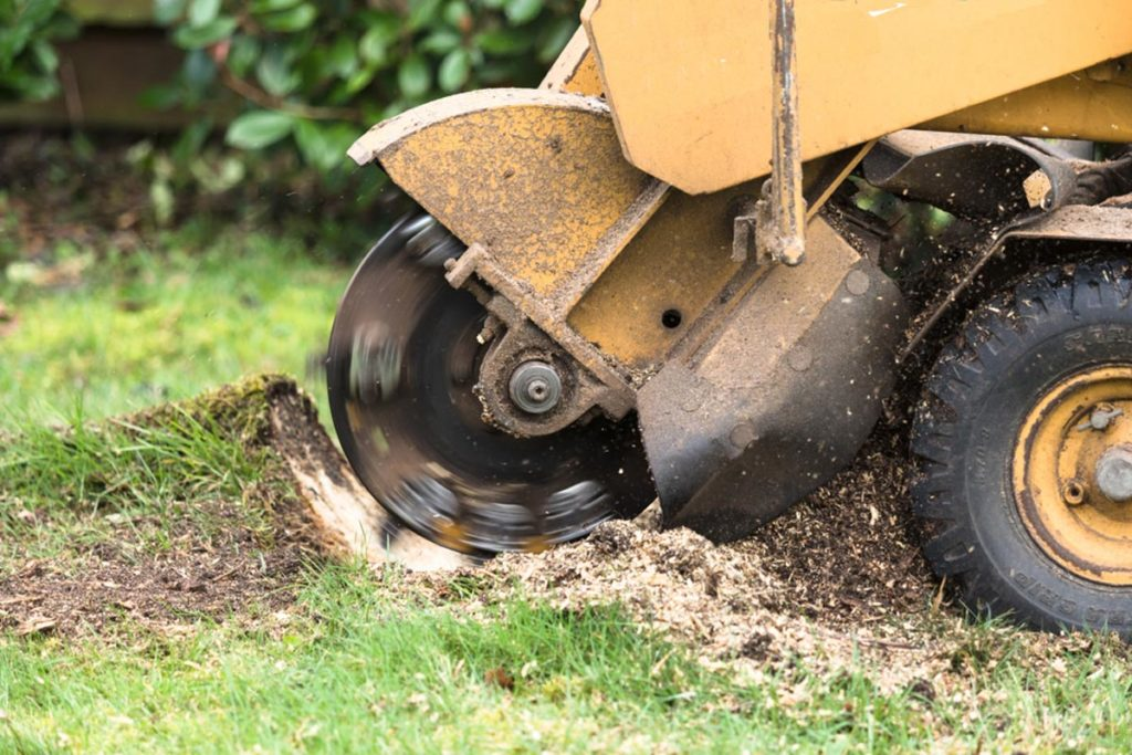 Stump Grinding-Mesa Tree Trimming and Stump Grinding Services-We Offer Tree Trimming Services, Tree Removal, Tree Pruning, Tree Cutting, Residential and Commercial Tree Trimming Services, Storm Damage, Emergency Tree Removal, Land Clearing, Tree Companies, Tree Care Service, Stump Grinding, and we're the Best Tree Trimming Company Near You Guaranteed!