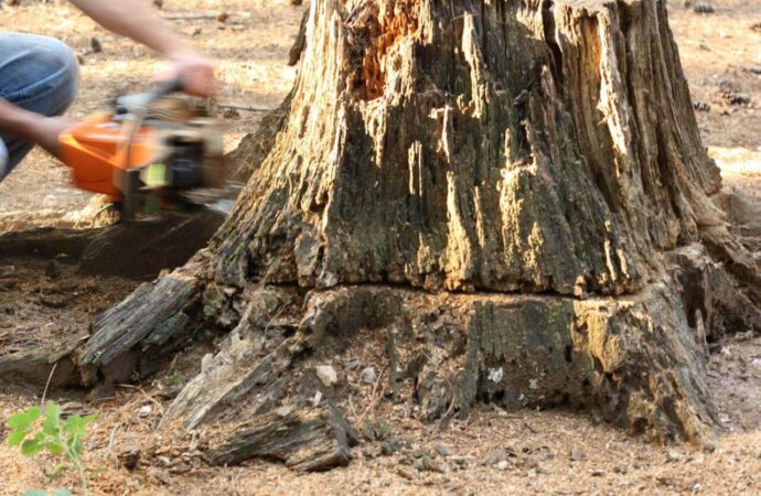 Stump Removal-Mesa Tree Trimming and Stump Grinding Services-We Offer Tree Trimming Services, Tree Removal, Tree Pruning, Tree Cutting, Residential and Commercial Tree Trimming Services, Storm Damage, Emergency Tree Removal, Land Clearing, Tree Companies, Tree Care Service, Stump Grinding, and we're the Best Tree Trimming Company Near You Guaranteed!
