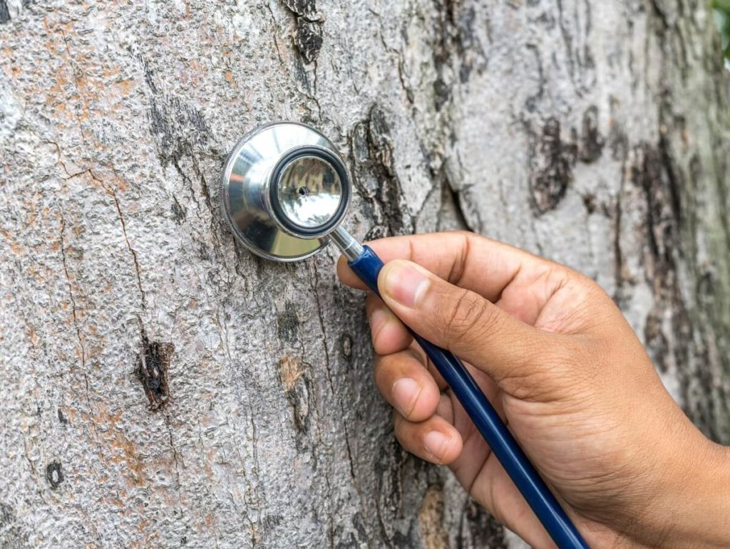 Tree Assessments-Mesa Tree Trimming and Stump Grinding Services-We Offer Tree Trimming Services, Tree Removal, Tree Pruning, Tree Cutting, Residential and Commercial Tree Trimming Services, Storm Damage, Emergency Tree Removal, Land Clearing, Tree Companies, Tree Care Service, Stump Grinding, and we're the Best Tree Trimming Company Near You Guaranteed!