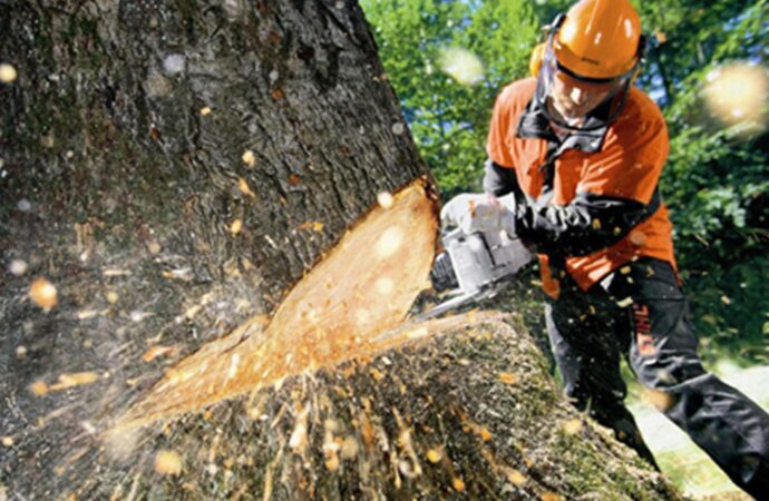 Tree Cutting-Mesa Tree Trimming and Stump Grinding Services-We Offer Tree Trimming Services, Tree Removal, Tree Pruning, Tree Cutting, Residential and Commercial Tree Trimming Services, Storm Damage, Emergency Tree Removal, Land Clearing, Tree Companies, Tree Care Service, Stump Grinding, and we're the Best Tree Trimming Company Near You Guaranteed!
