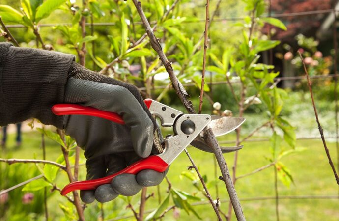 Tree Pruning-Mesa Tree Trimming and Stump Grinding Services-We Offer Tree Trimming Services, Tree Removal, Tree Pruning, Tree Cutting, Residential and Commercial Tree Trimming Services, Storm Damage, Emergency Tree Removal, Land Clearing, Tree Companies, Tree Care Service, Stump Grinding, and we're the Best Tree Trimming Company Near You Guaranteed!