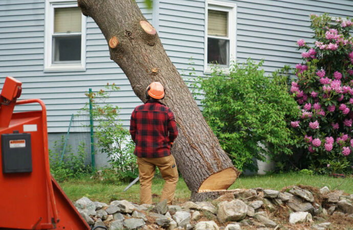 Tree Removal-Mesa Tree Trimming and Stump Grinding Services-We Offer Tree Trimming Services, Tree Removal, Tree Pruning, Tree Cutting, Residential and Commercial Tree Trimming Services, Storm Damage, Emergency Tree Removal, Land Clearing, Tree Companies, Tree Care Service, Stump Grinding, and we're the Best Tree Trimming Company Near You Guaranteed!