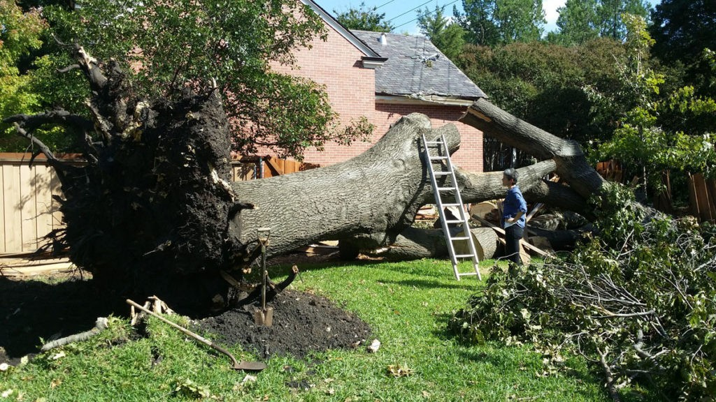 Apache Junction-Mesa Tree Trimming and Stump Grinding Services-We Offer Tree Trimming Services, Tree Removal, Tree Pruning, Tree Cutting, Residential and Commercial Tree Trimming Services, Storm Damage, Emergency Tree Removal, Land Clearing, Tree Companies, Tree Care Service, Stump Grinding, and we're the Best Tree Trimming Company Near You Guaranteed!