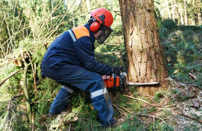 Gilbert-Mesa Tree Trimming and Stump Grinding Services-We Offer Tree Trimming Services, Tree Removal, Tree Pruning, Tree Cutting, Residential and Commercial Tree Trimming Services, Storm Damage, Emergency Tree Removal, Land Clearing, Tree Companies, Tree Care Service, Stump Grinding, and we're the Best Tree Trimming Company Near You Guaranteed!