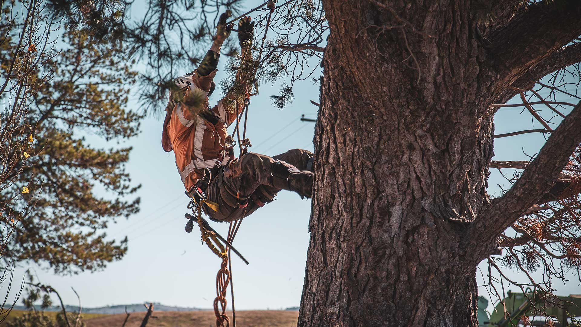 Tempe-Mesa Tree Trimming and Stump Grinding Services-We Offer Tree Trimming Services, Tree Removal, Tree Pruning, Tree Cutting, Residential and Commercial Tree Trimming Services, Storm Damage, Emergency Tree Removal, Land Clearing, Tree Companies, Tree Care Service, Stump Grinding, and we're the Best Tree Trimming Company Near You Guaranteed!