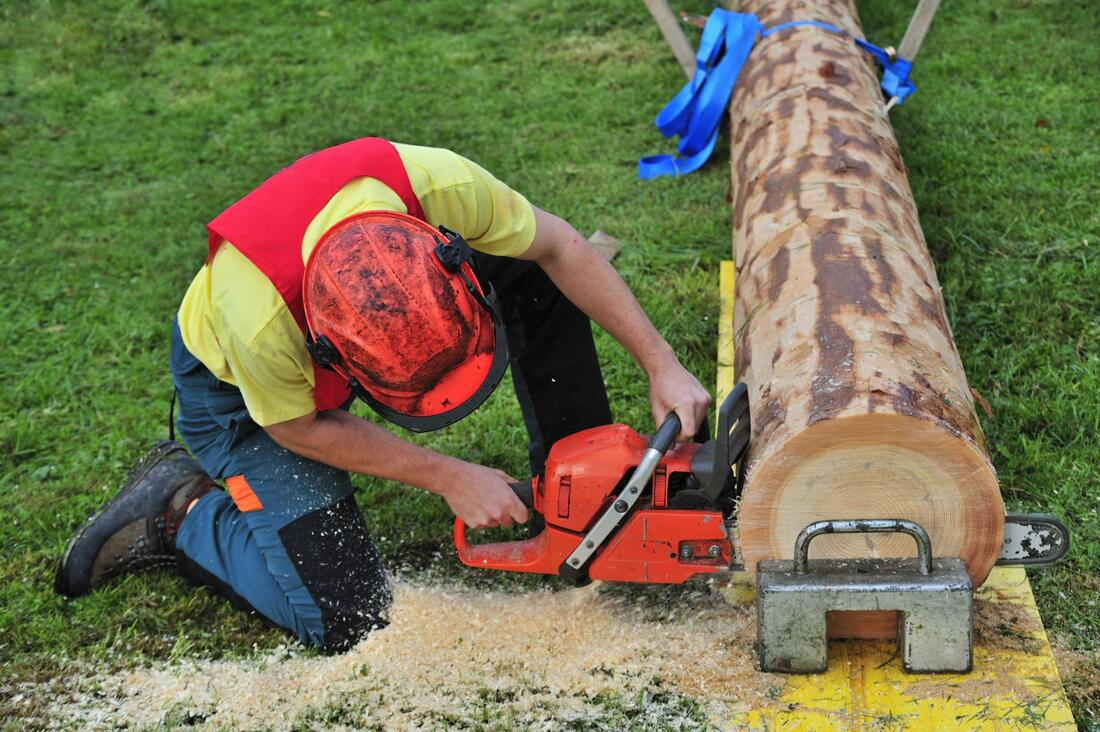 Youngberg-Mesa Tree Trimming and Stump Grinding Services-We Offer Tree Trimming Services, Tree Removal, Tree Pruning, Tree Cutting, Residential and Commercial Tree Trimming Services, Storm Damage, Emergency Tree Removal, Land Clearing, Tree Companies, Tree Care Service, Stump Grinding, and we're the Best Tree Trimming Company Near You Guaranteed!